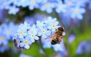 Providing Pollinators More Than Just Flowers
