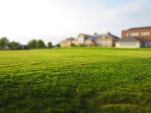 Fall Seeding Of Lawns