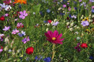 Online Master Gardener Training Available